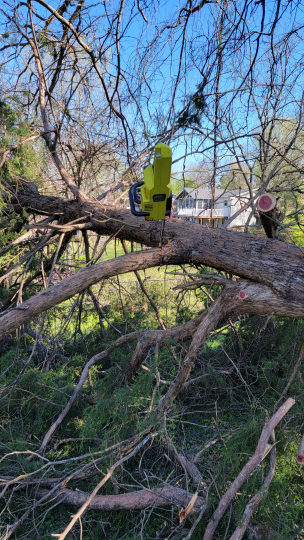 Chainsaw eating tree - good grief